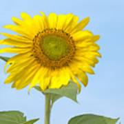 Sunny Sunflower Art Print
