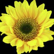 Sunny Sunflower Black Yellow Art Print