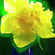 Sunny Tulip In Vase. Art Print