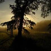 Sunrise Behind Elm Tree Art Print