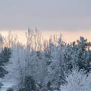 Sunrise Glos Behind Trees Frozen Trees Art Print