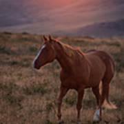 Sunrise Horse Art Print