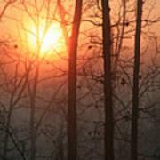 Sunrise In A Foggy Wood Art Print
