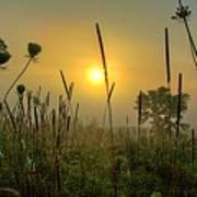 Sunrise In The Swamp Art Print