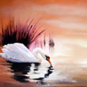 Sunrise On Swan Lake Art Print