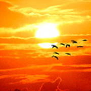 Sunrise / Sunset / Sandhill Cranes Art Print