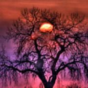 Sunrise Through The Foggy Tree Art Print