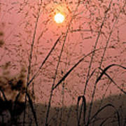 Sunrise Through The Tall Grass Art Print