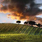 Sunrise Vineyard Art Print