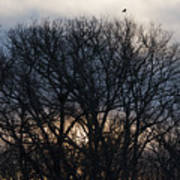 Sunrise With Bird Art Print