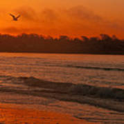 Sunrise With Seagull Art Print