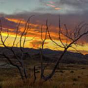 Sunset And Petrified Tree Art Print