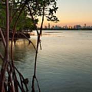 Sunset At Miami Behind Wild Mangrove Forest Print by Matt Tilghman