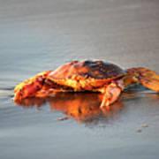 Sunset Crab Art Print