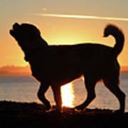 Sunset Howl Art Print