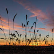 Sunset In The Weeds Art Print