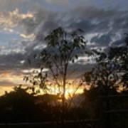 Sunset Leaves 5 Art Print