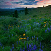 Sunset Meadow Trail Art Print