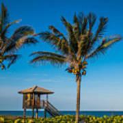 Sunset Palms Delray Beach Florida Art Print