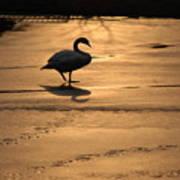 Sunset Swan Art Print