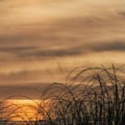Sunset Through The Seagrass Art Print
