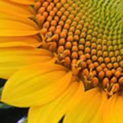 Sunshine In A Flower Art Print