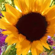 Sunshine Sunflower In The Garden Art Print