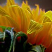 Sunshine Sunflower Petals Two Art Print