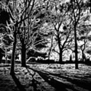 Super Contrasted Trees Art Print