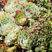 Super Succulents Art Print