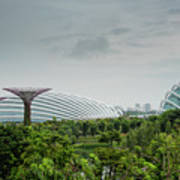 Supertrees At Gardens By The Bay Art Print