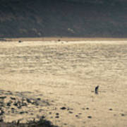 Surfing At Leo Carrillo Beach Art Print