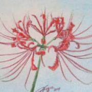 Surprise Lily Art Print