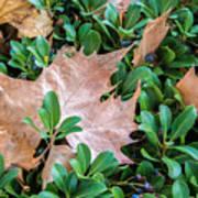 Surrounded Leaf Art Print