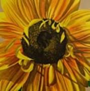 Susanna's Sunflower Art Print