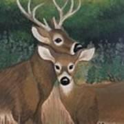 Suwannee River Afternoon Art Print