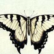 Swallow-tail Butterfly Art Print