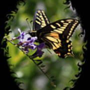 Swallowtail Butterfly 1 With Swirly Frame Art Print