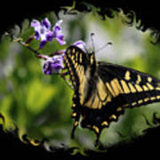 Swallowtail Butterfly 2 With Swirly Framing Art Print