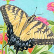 Swallowtail Butterfly And Zinnias Art Print