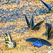 Swallowtail Butterfly Convention Art Print