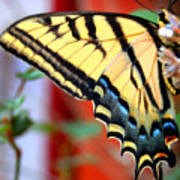 Swallowtail Wing Art Print