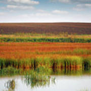 Swamp And Field Landscape Autumn Season Art Print
