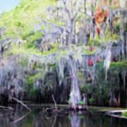 Swamp Colors Art Print