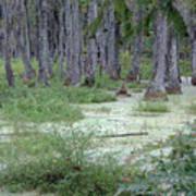 Swamp Garden At Magnolia Plantation And Gardens Art Print