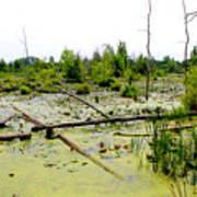 Swamp Habitat Art Print