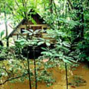 Swamp Hut In Honduras Art Print