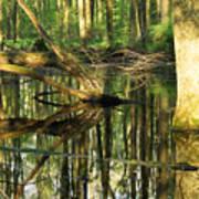 Swamps Are Beautiful Too Art Print
