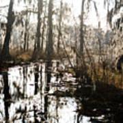Swamps Of Louisiana 5 Art Print