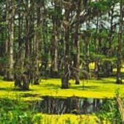 Swampy Beauty Art Print